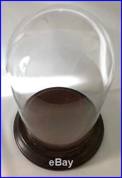 Antique Large 12 x 8 Glass Display Dome Case Plus Original Wood Base