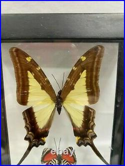 Display Real butterfly Double Glass Shadow Box Wood Frame Case Taxidermy EUC