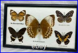 Display Real butterfly Glass Shadow Box Wood Frame Case Taxidermy EUC